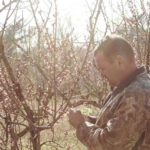 Cold weather cripples Richmond County crops